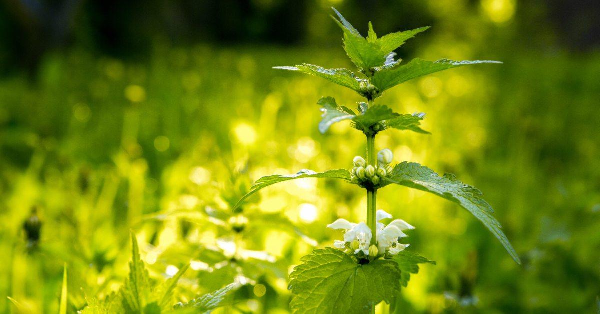 Onkruid bestrijden zonder chemische middelen de ultieme gids - Een stuk grond ontwikkelen ...