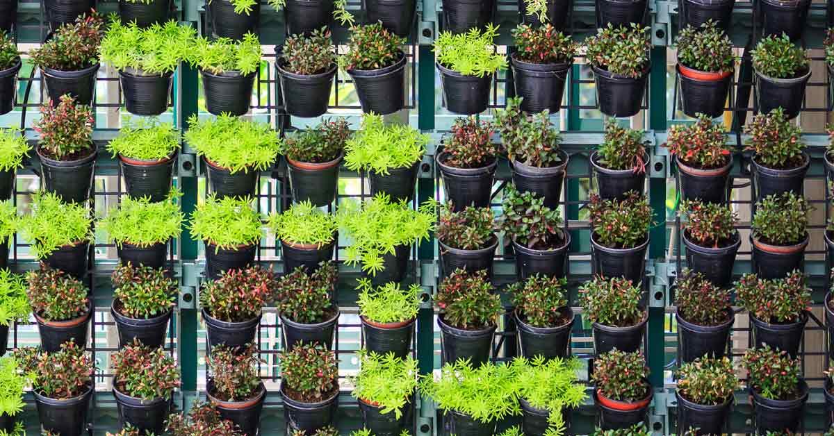 Verticale Tuin Maken : Zelf een verticale tuin plantenmuur maken buitenlevengevoel