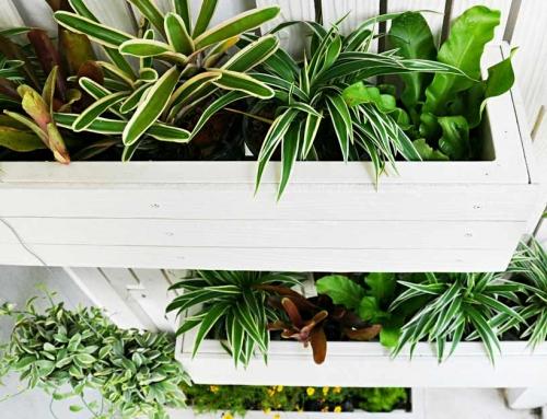 Zelf een Verticale Tuin & Plantenmuur maken