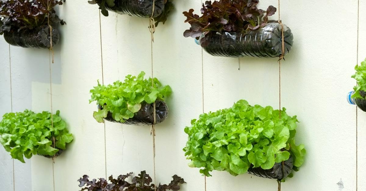 Een verticale tuin zelf maken creatief de lucht in met groen - Tuin van de tuin ...
