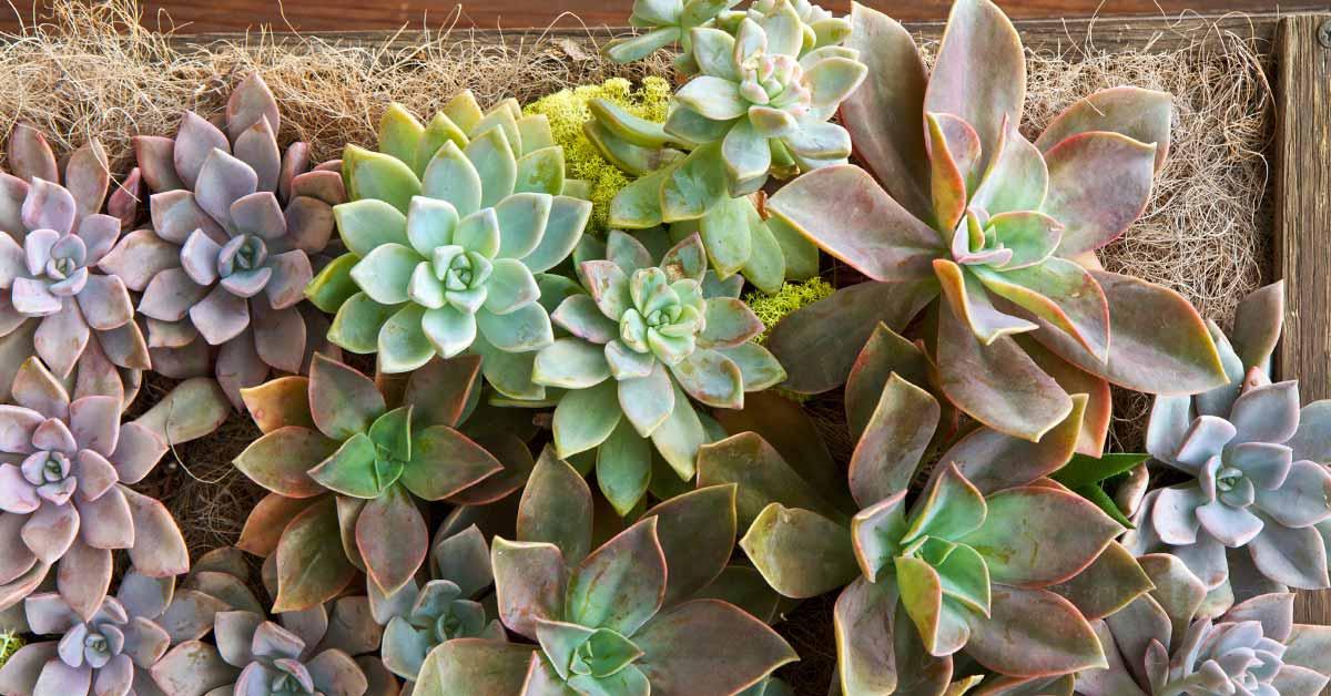 een verticale tuin zelf maken creatief de lucht in met groen On vetplanten tuin