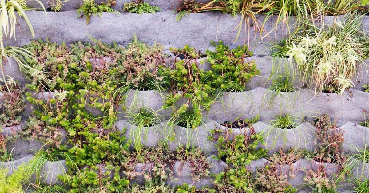 Zelf een verticale tuin plantenmuur maken buitenlevengevoel