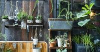 planten-in-potten