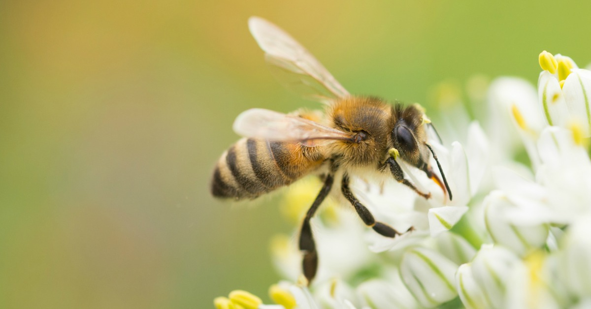 Bij-eet-nectar
