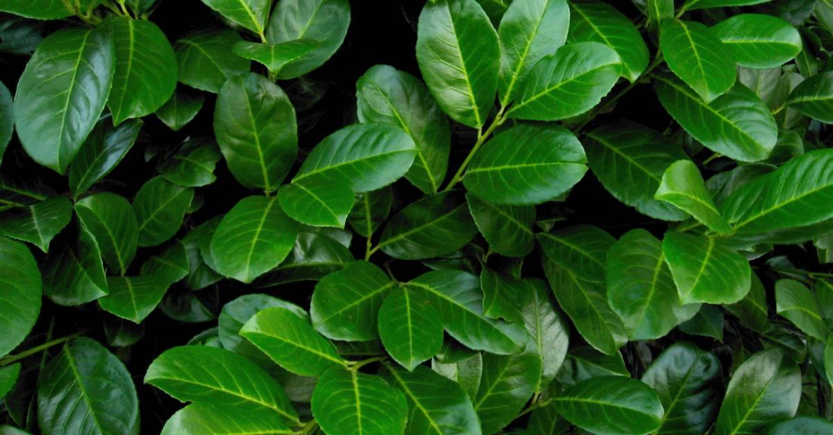 Groene Afscheiding Tuin : Groene erfafscheiding de mogelijkheden buitenlevengevoel