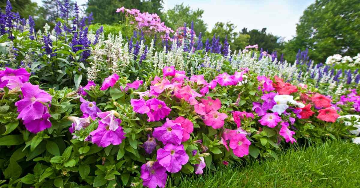 Paarse-en-roze-bloemen