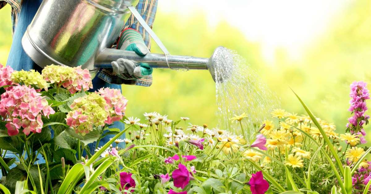 Planten-water-geven