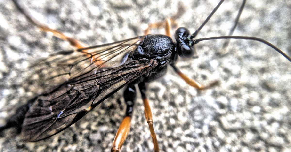 10x bewijs dat nuttige insecten in de tuin bestaan for Vliegen in de tuin
