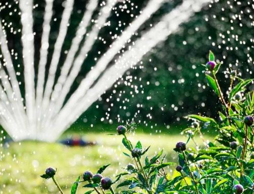 Besproeiingsregels voor Het Gazon en Planten