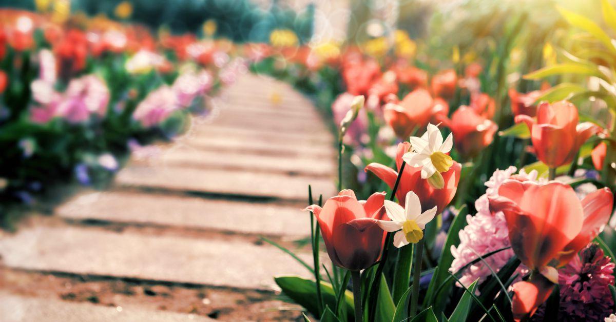 Tulpen-en-narcissen