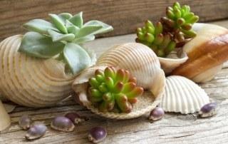 Vetplantjes-in-schelpen