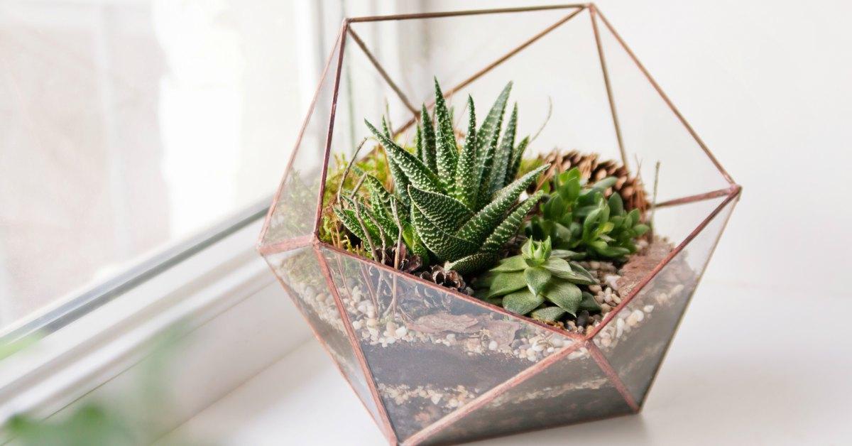 terrarium vetplantjes