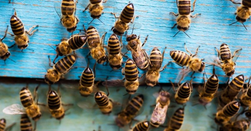 Bijen cover
