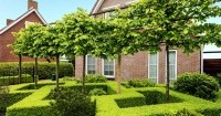 buxus cover