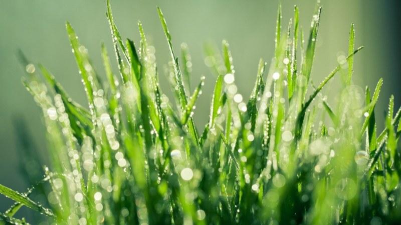 gras regen