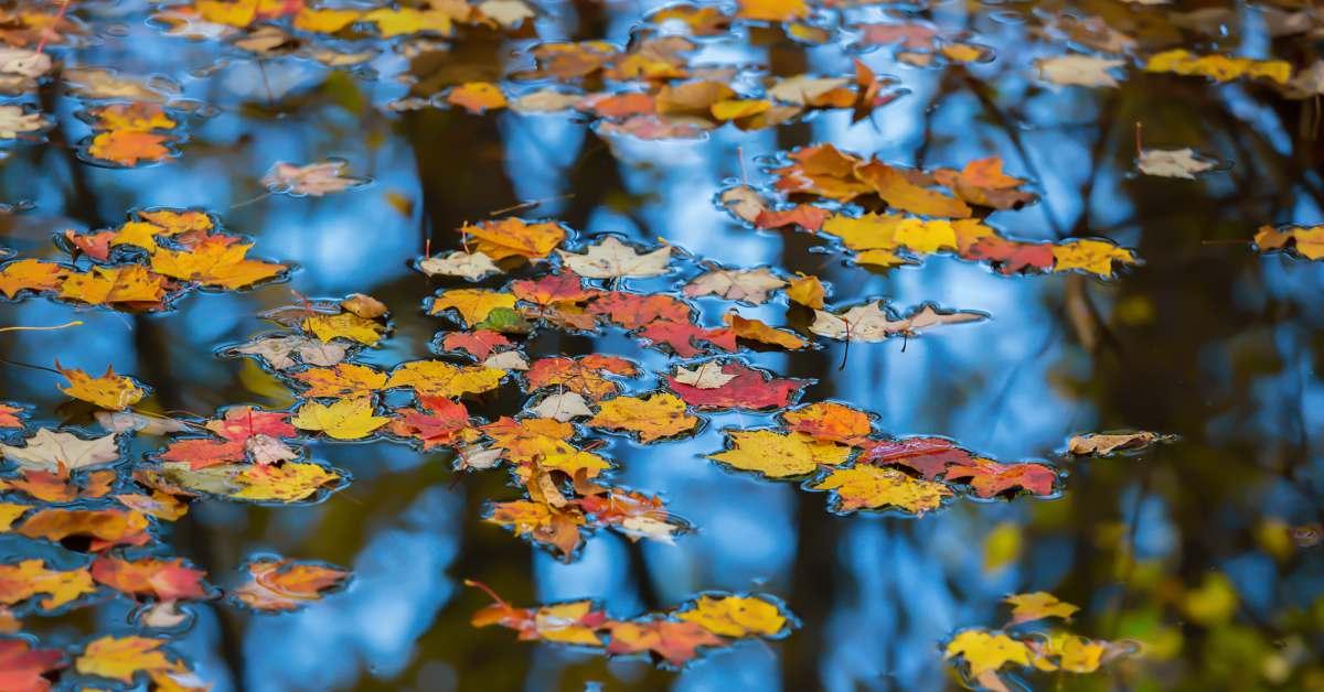 herfstblaadjes in de vijver