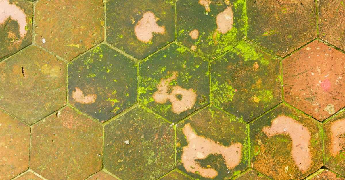 Tegels Tuin Schoonmaken : Het terras reinigen schoonmaken buitenlevengevoel