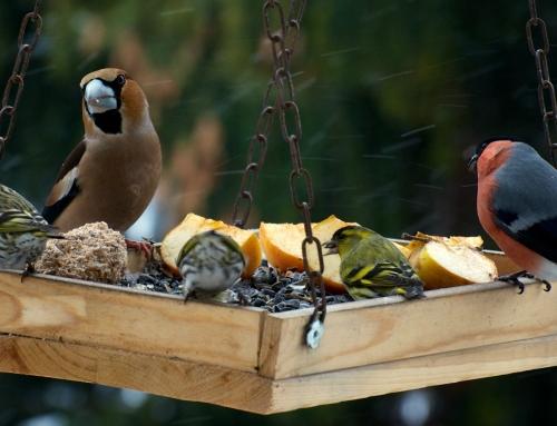 Zelf vogelvoer maken