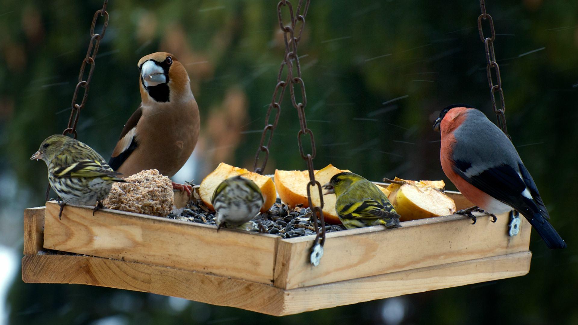 6 x zelf vogelvoer maken voor de herfst for Vliegen in de tuin