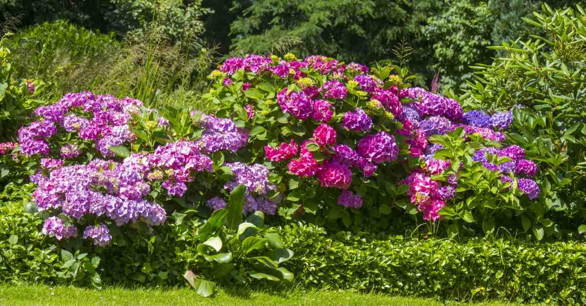 Bloemen-met-verschillende-kleurtinten