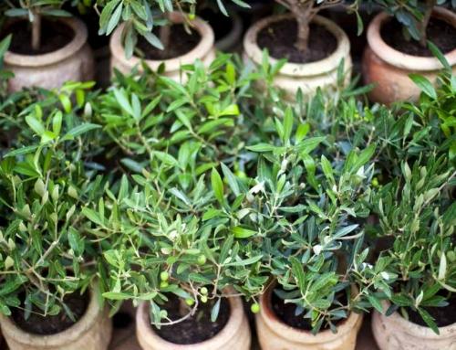 Online tuinplanten kopen