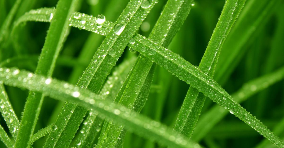 grassprietjes