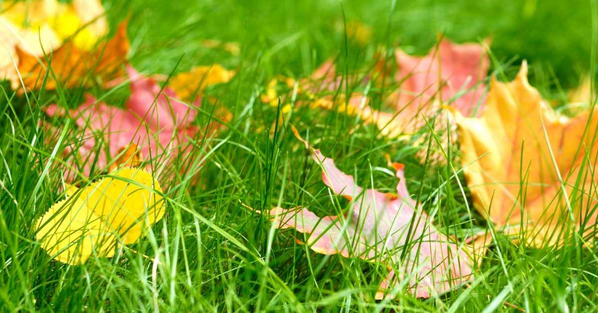 herfstbladeren op gras