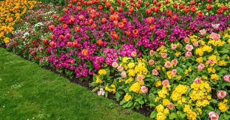 Beroemd Een Kleurrijke Border Aanleggen: Handige Tips Voor Jouw Tuin #CW79