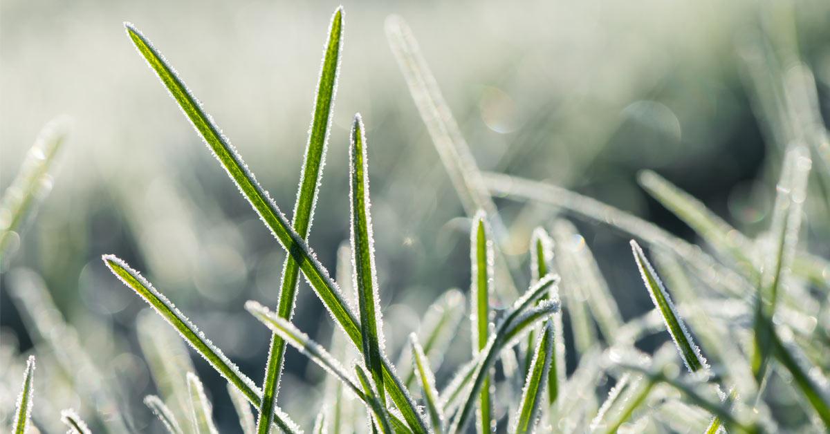 Winterklaar Maken Tuin : De tuin winterklaar maken stappen buitenlevengevoel