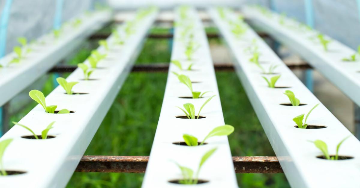 Kweken-van-planten-volgens-hydroponics
