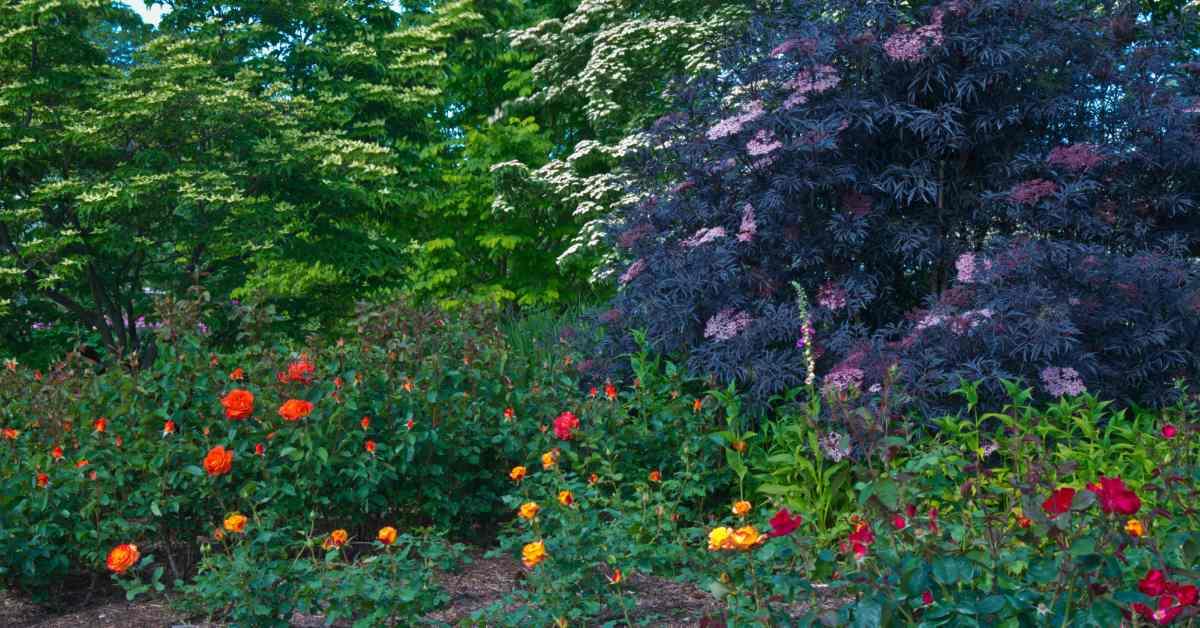 Natuurlijke-tuin