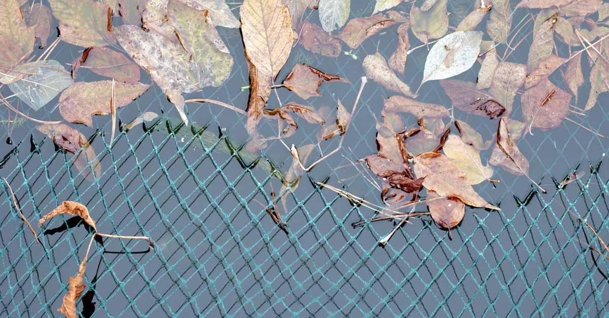 Net over vijver