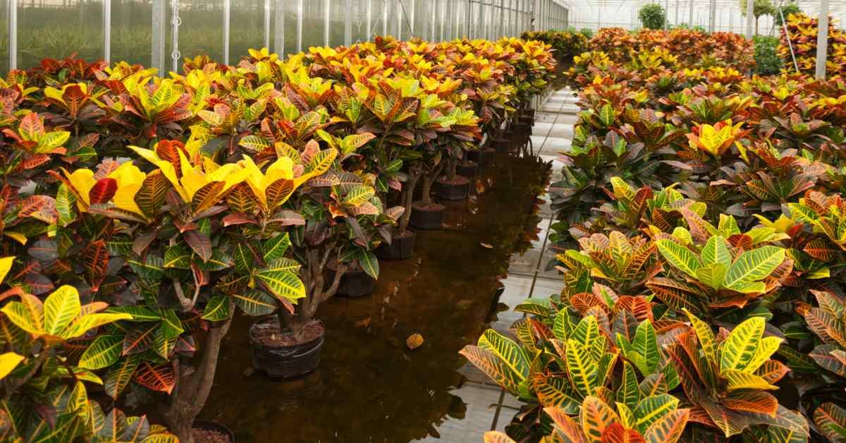 Planten-kweken-volgens0hydroponics