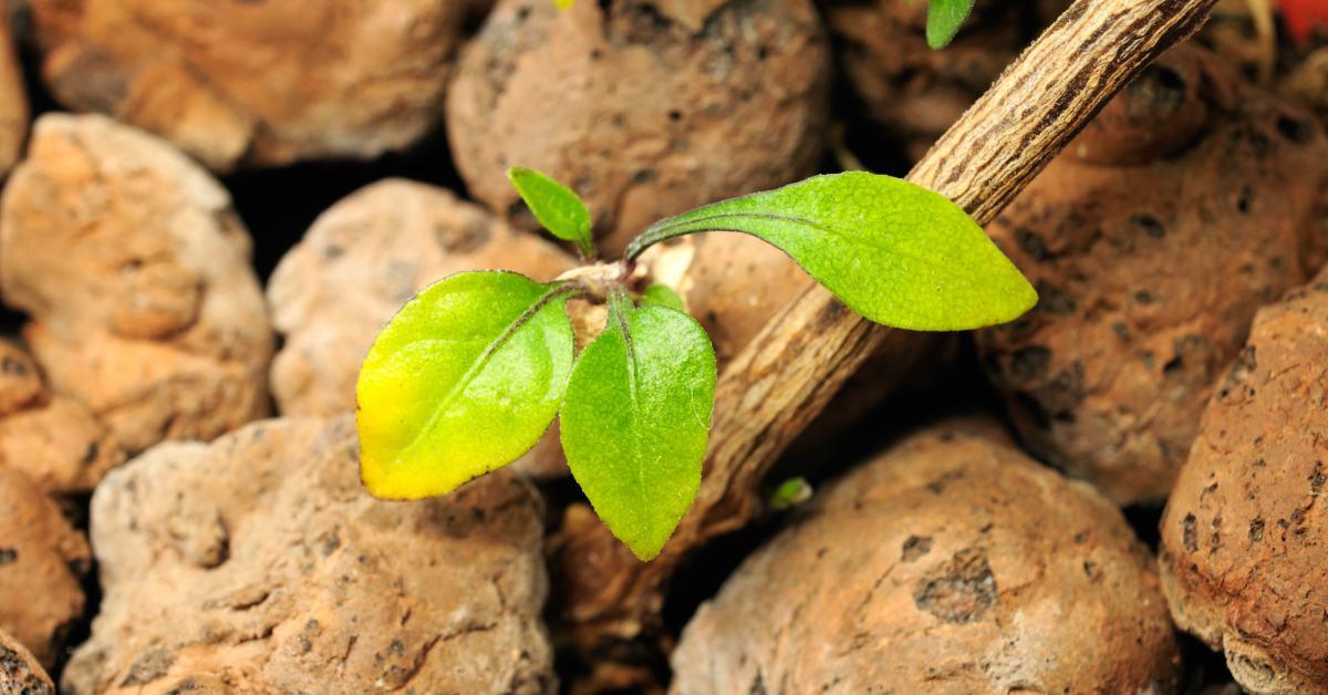 Plantje-in-hydrokorrels