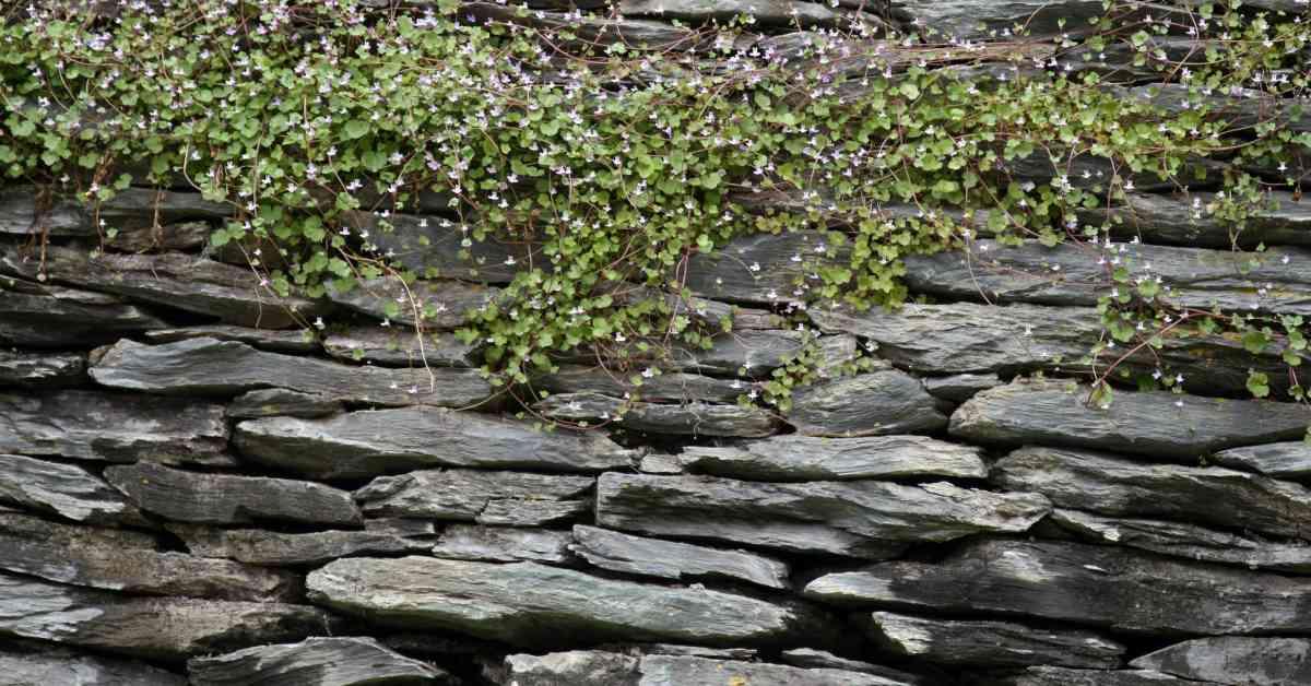 Stenen-muur-als-erfafscheiding