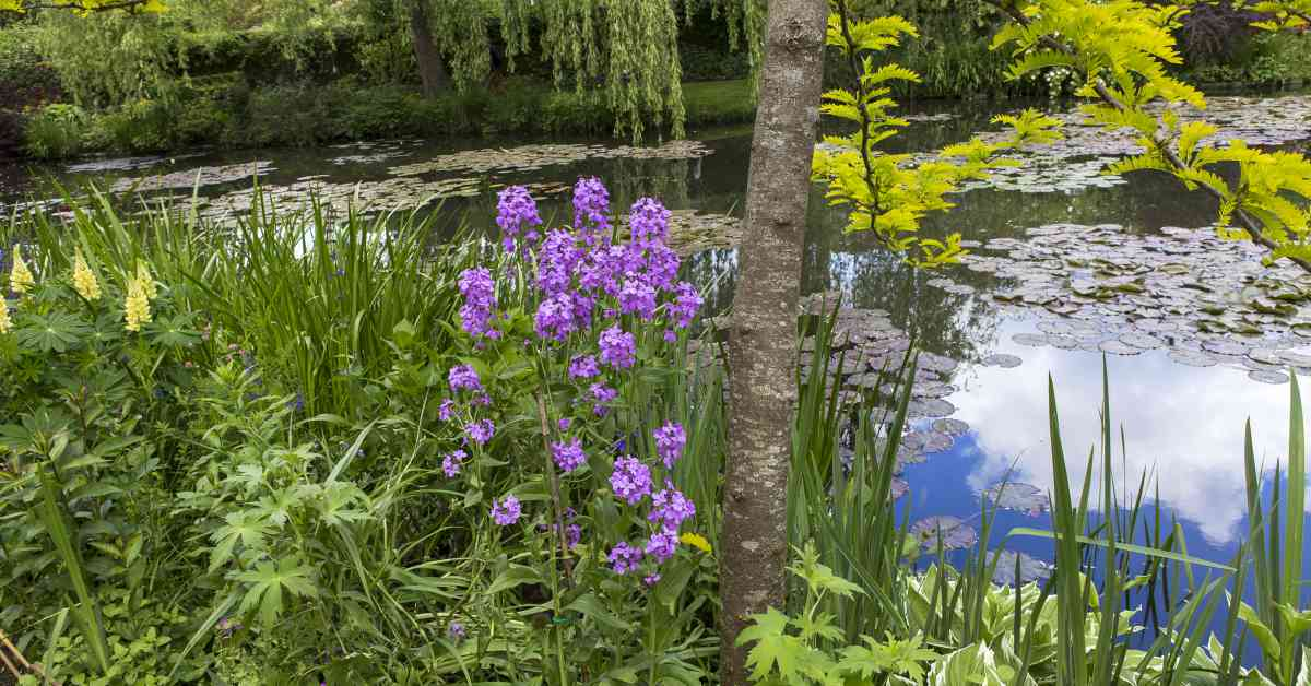 Tuin-met-vijver-met-planten