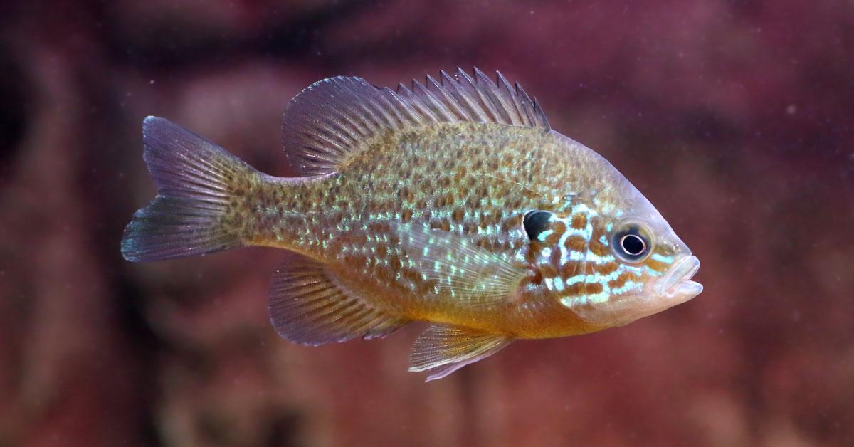 Vissen In Vijver : Alles over vijvervissen vissen voor in de vijver
