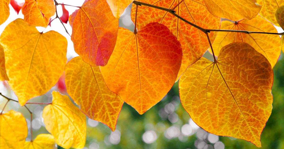 Bladeren-in-herfsttinten
