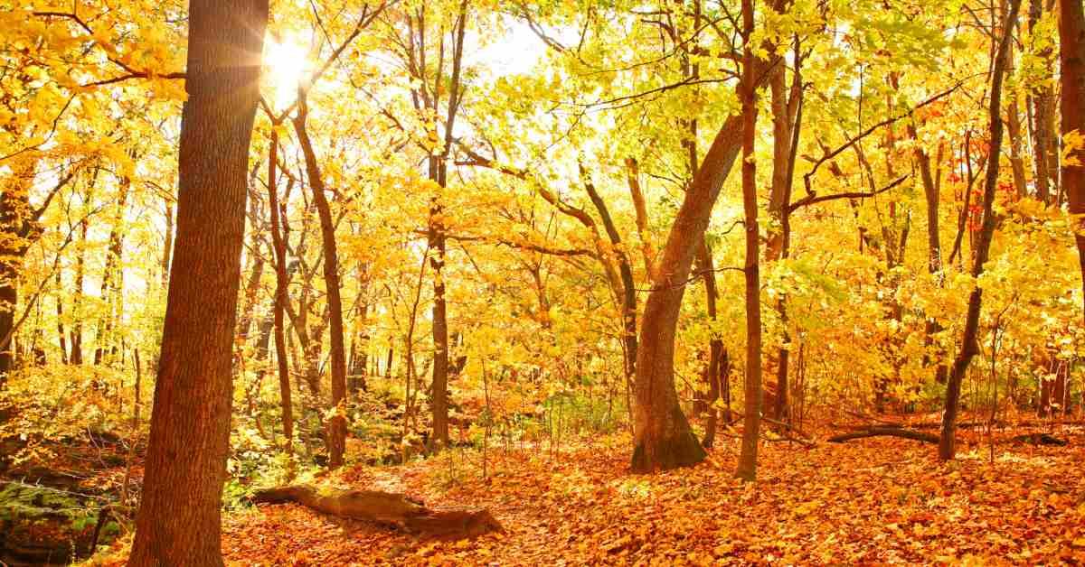 Bos-in-de-herfst