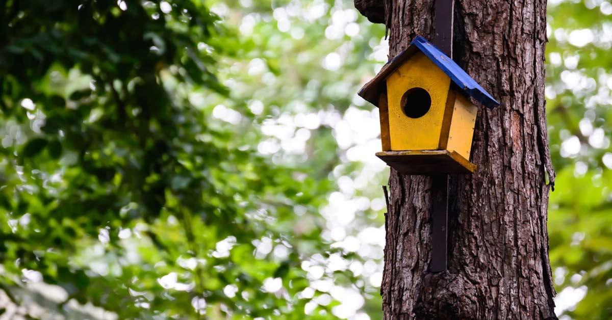 Vogelhuisje ophangen