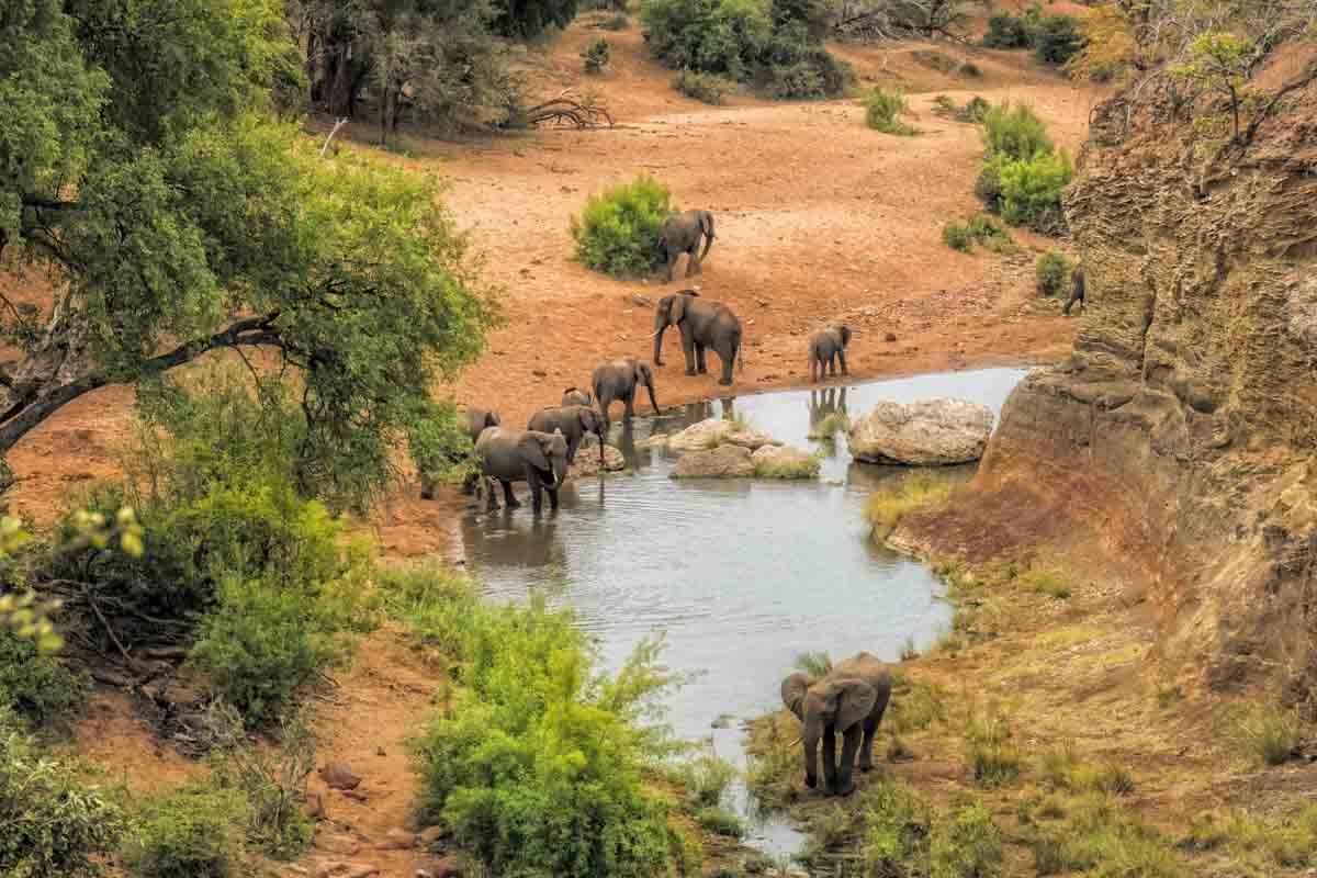 Krugar-nationaal-park-Zuid-Afrika