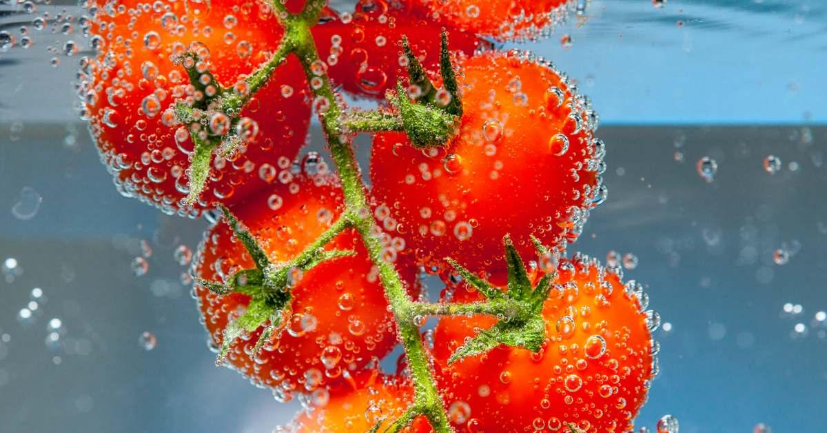luchtbellen-rond-tomaten