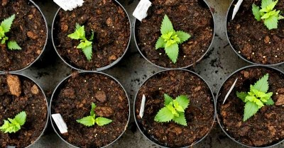 planten-stekken