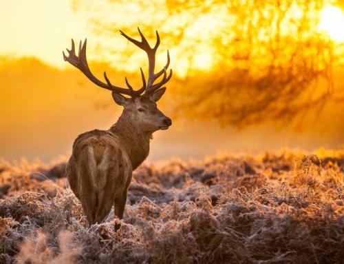 5 Wandelroutes In De Hoge Veluwe