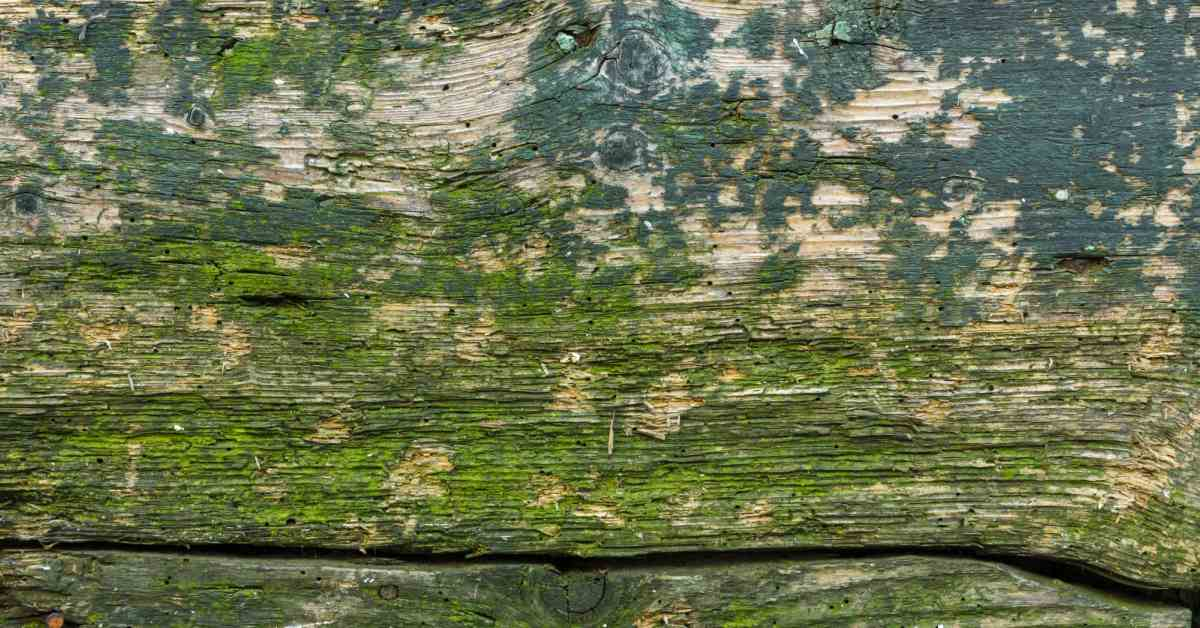 Groene-aanslag-op-houten-tafel