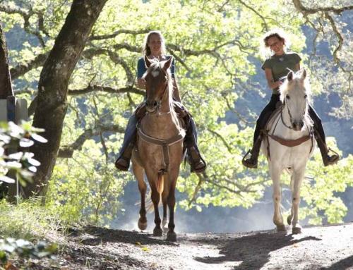 11 Prachtige paardrijroutes in Friesland