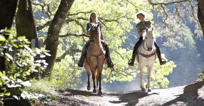 Paardrijden-in-Friesland