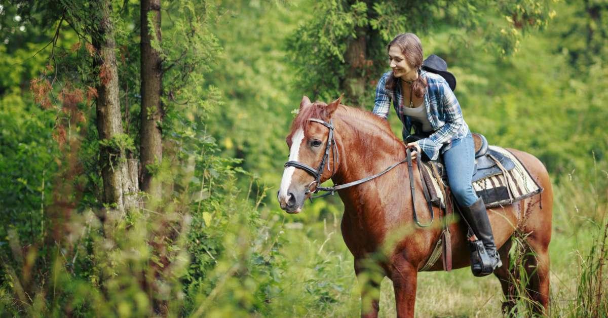 Paardrijden-in-het-bos
