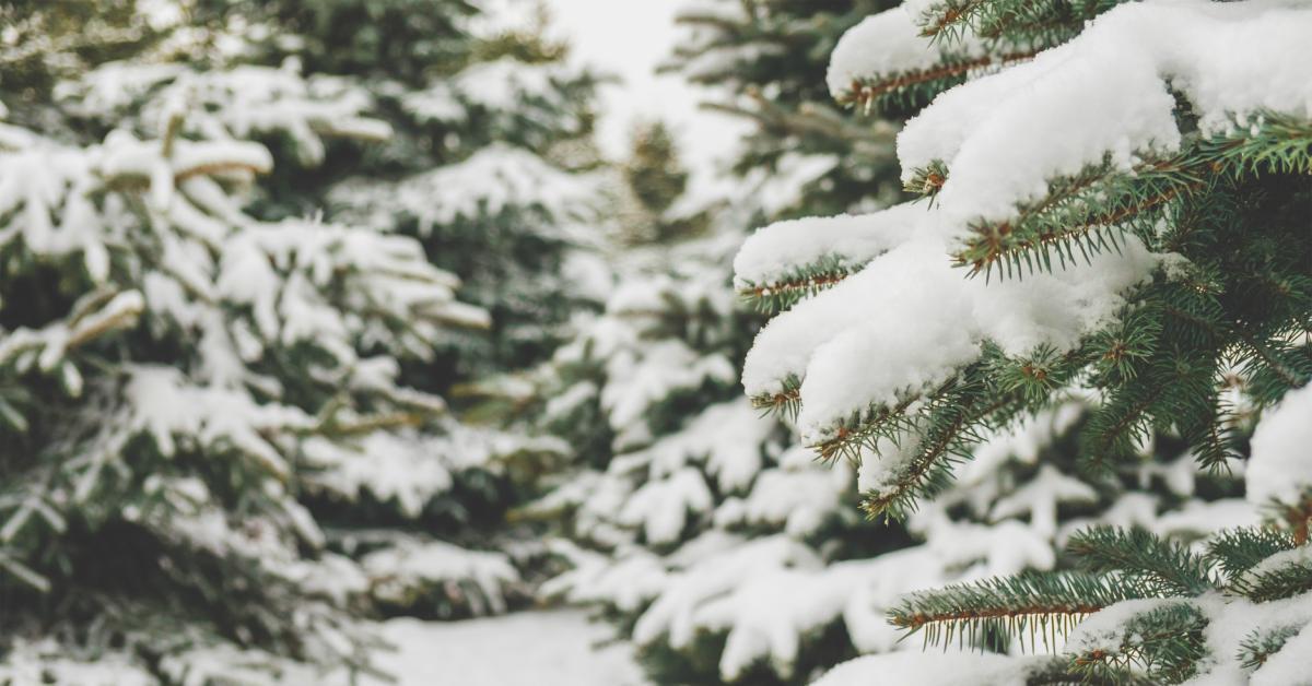 Sneeuw-op-bomen