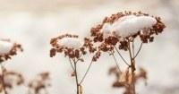 Tuin-in-winter